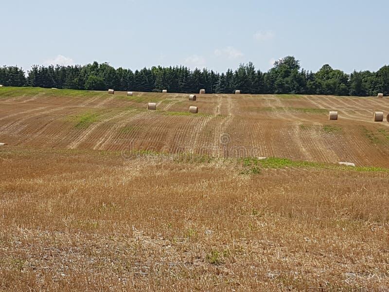 Giacimenti di grano vicino alla città in Ontario fotografie stock libere da diritti