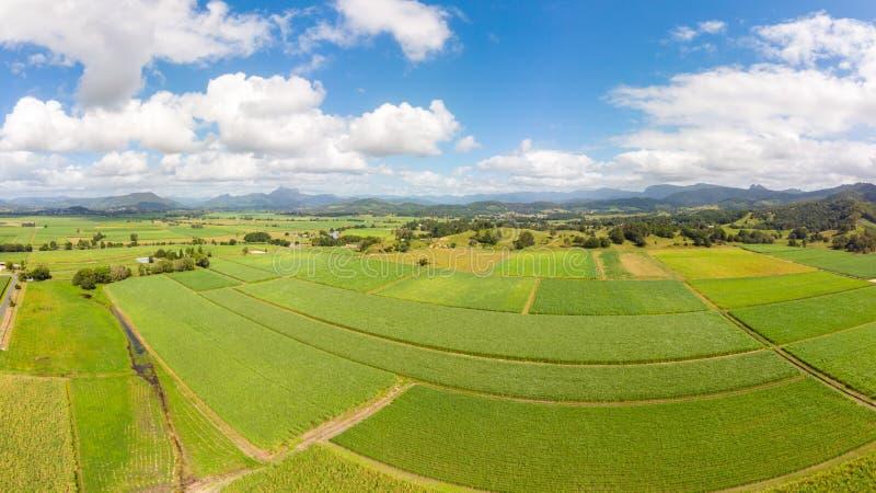 Giacimenti e paesaggio australiani della canna da zucchero fotografia stock libera da diritti