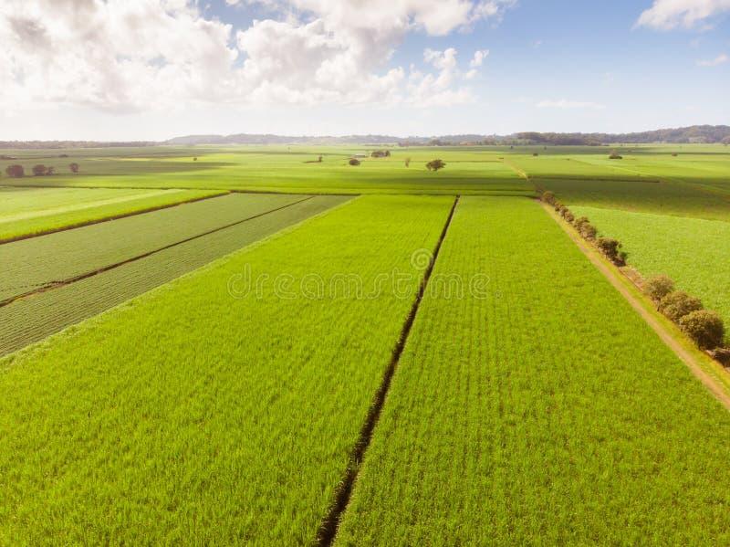Giacimenti e paesaggio australiani della canna da zucchero fotografie stock libere da diritti