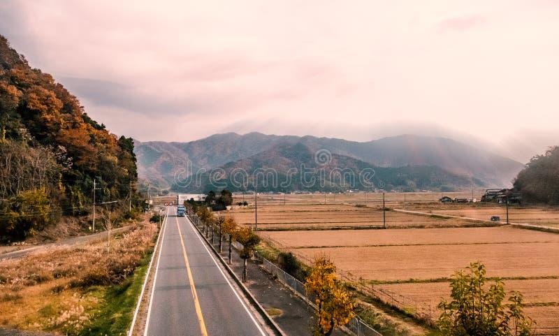 Giacimento del riso alla campagna giapponese in autunno fotografia stock libera da diritti