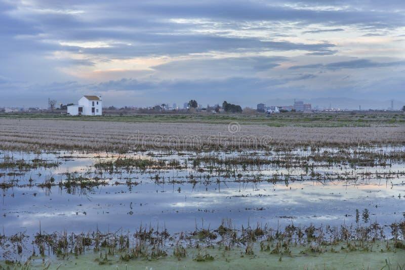 Giacimento del riso con un cottage in Albufera di Valencia al tramonto fotografie stock libere da diritti