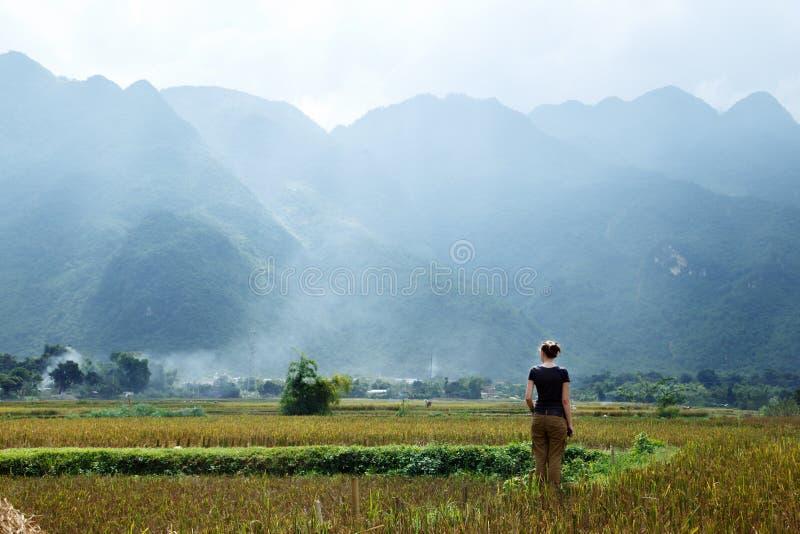 Giacimento del riso del ` s del Vietnam fotografia stock libera da diritti