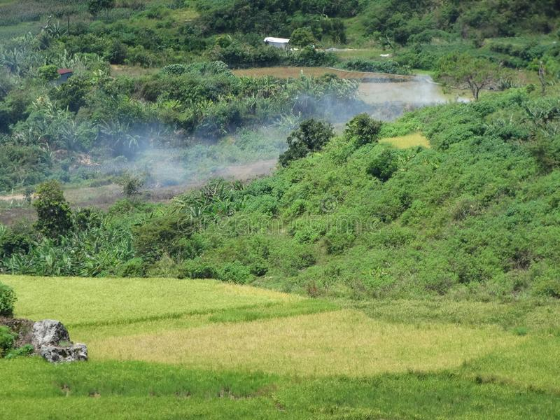 Giacimento del riso di Sagada, Luzon, Filippine immagine stock libera da diritti