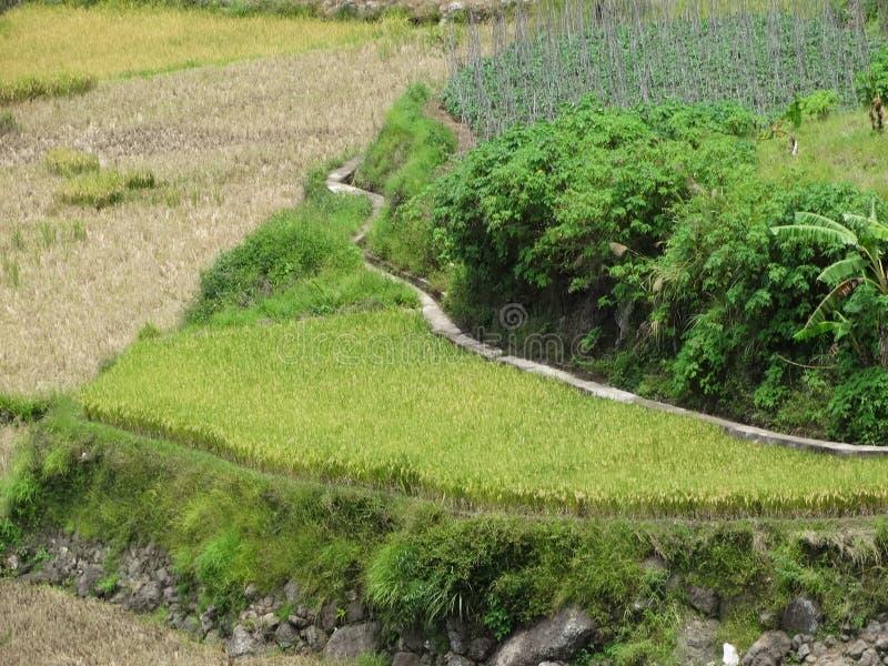 Giacimento del riso di Sagada, Luzon, Filippine immagini stock