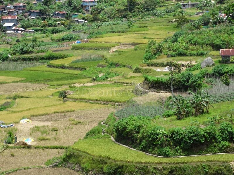 Giacimento del riso di Sagada, Luzon, Filippine fotografie stock libere da diritti