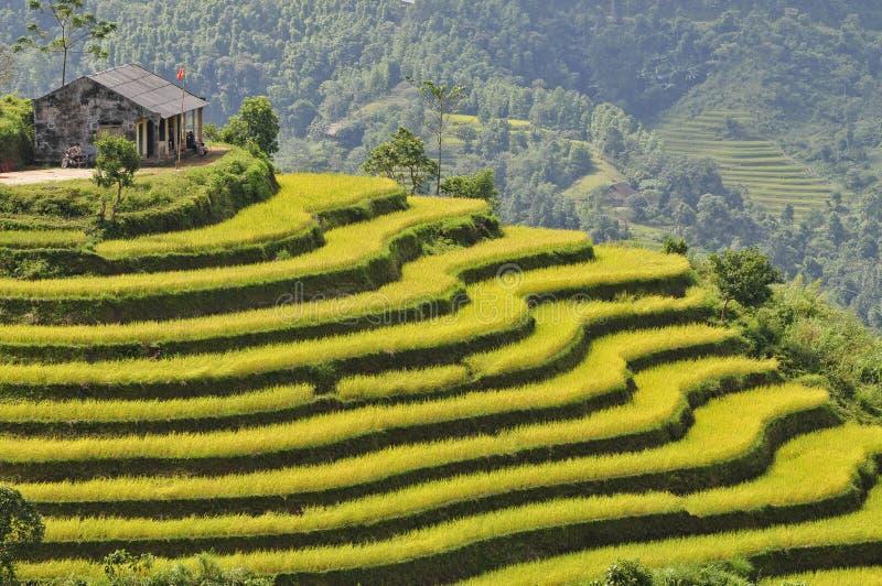 Giacimento del riso in Ha Giang fotografie stock