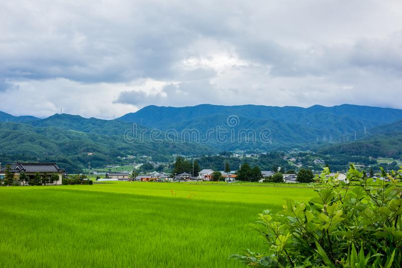 Giacimento del riso nella provincia giapponese nella prefettura di Nagano fotografia stock