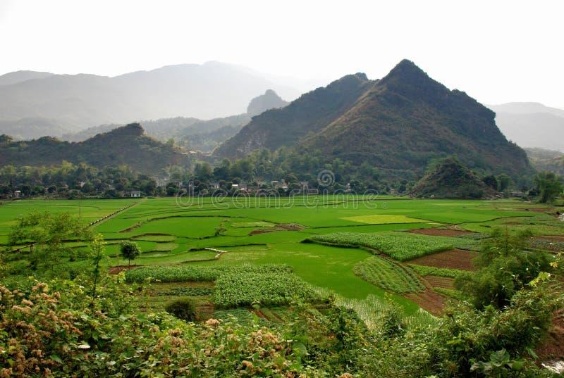 Giacimento del riso in Sapa fotografie stock