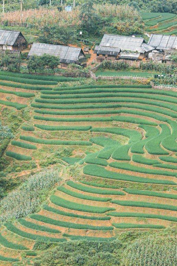 Giacimento del riso in Sapa, Vietnam fotografie stock