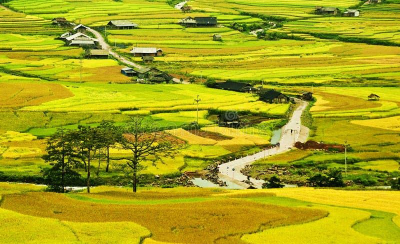 Giacimento del riso su a terrazze in montagna. immagini stock