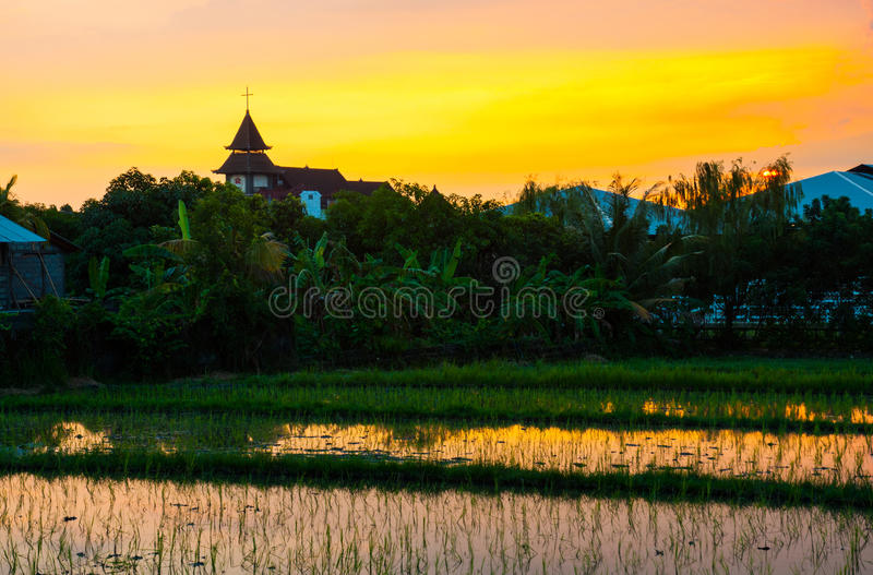 Giacimento del riso sul tramonto immagine stock libera da diritti