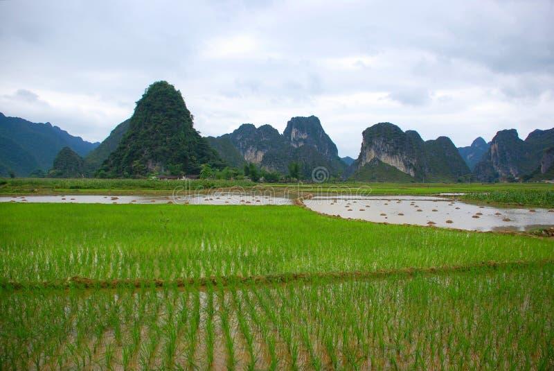 Giacimento del riso sulla valle immagine stock libera da diritti