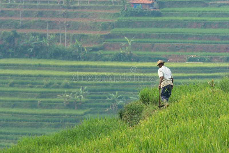 Giacimento del riso in Sumedang, Java ad ovest, Indonesia immagine stock libera da diritti