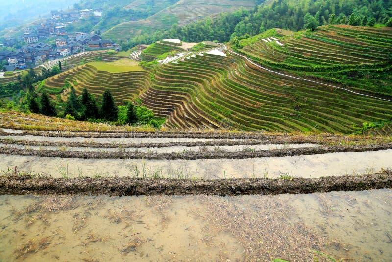 Giacimento del riso del terrazzo di Longji immagine stock libera da diritti