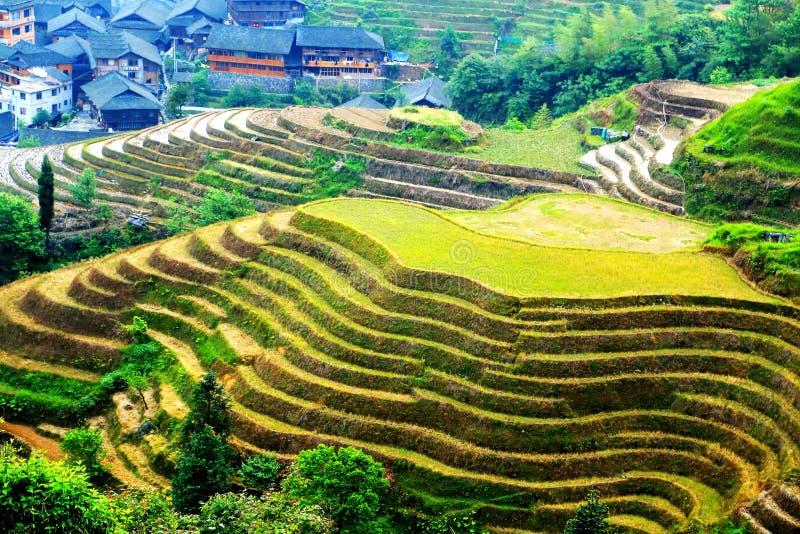 Giacimento del riso del terrazzo di Longji immagine stock