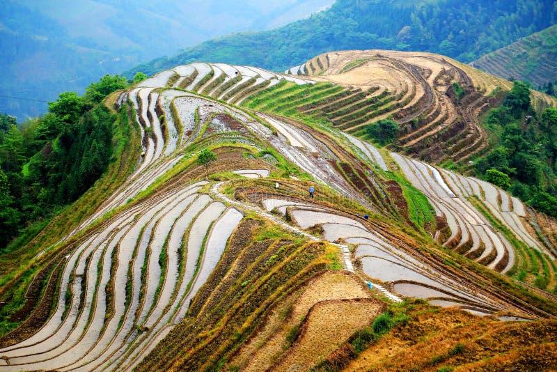 Giacimento del riso del terrazzo di Longji fotografie stock
