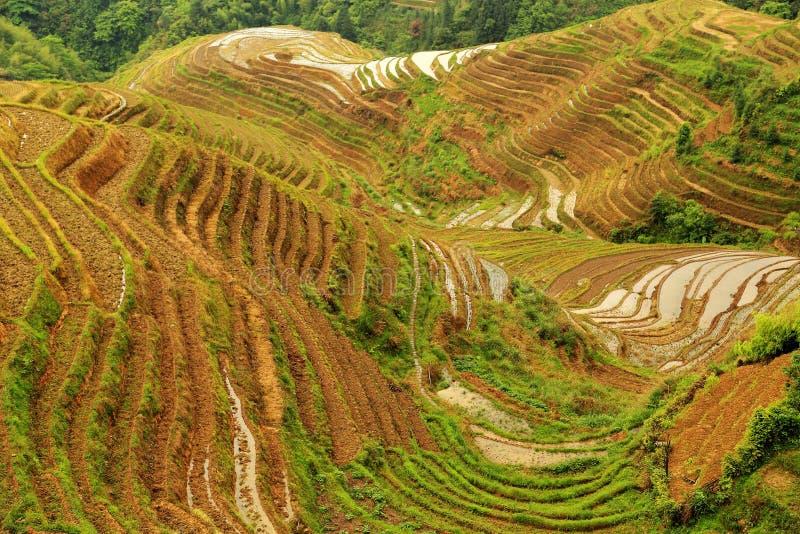 Giacimento del riso del terrazzo di Longji immagini stock