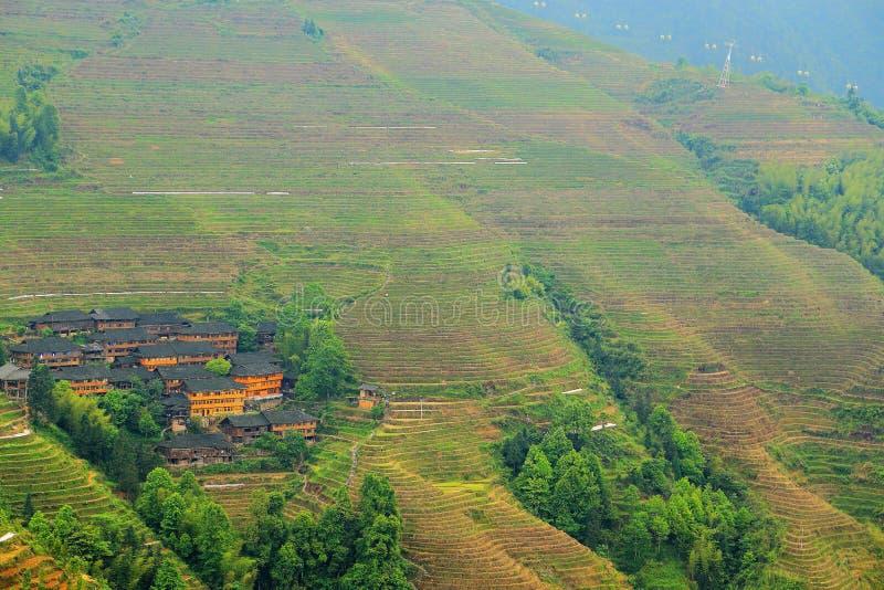 Giacimento del riso del terrazzo di Longji fotografia stock libera da diritti