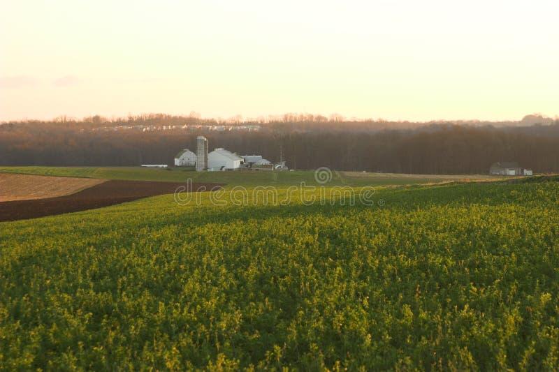 Giacimento dell'erba medica di autunno immagine stock