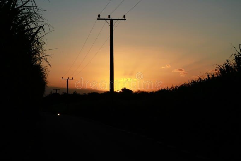 Giacimento della canna da zucchero di tramonto fotografie stock