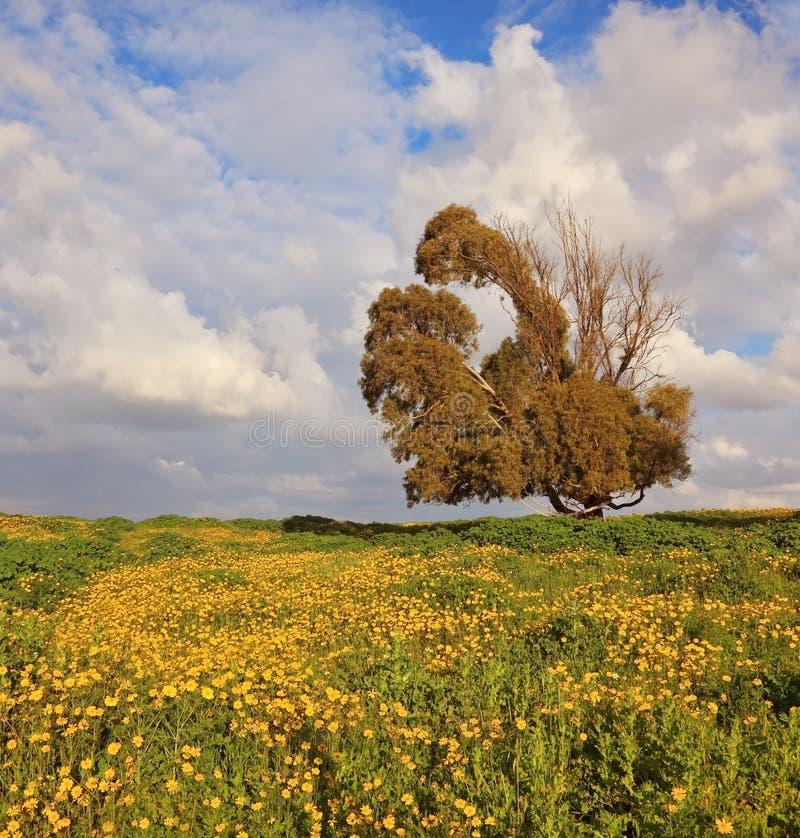 Asciughi l'albero enorme bizzarro immagini stock libere da diritti