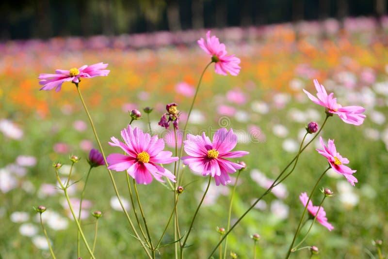 giacimento di fiore dell'universo fotografia stock