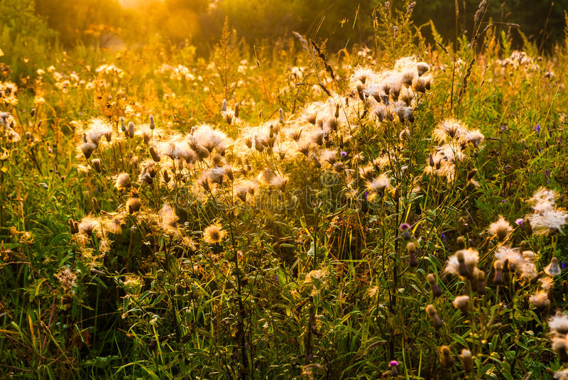 Giacimento di fiore nell'ambito della luce solare di mattina fotografia stock