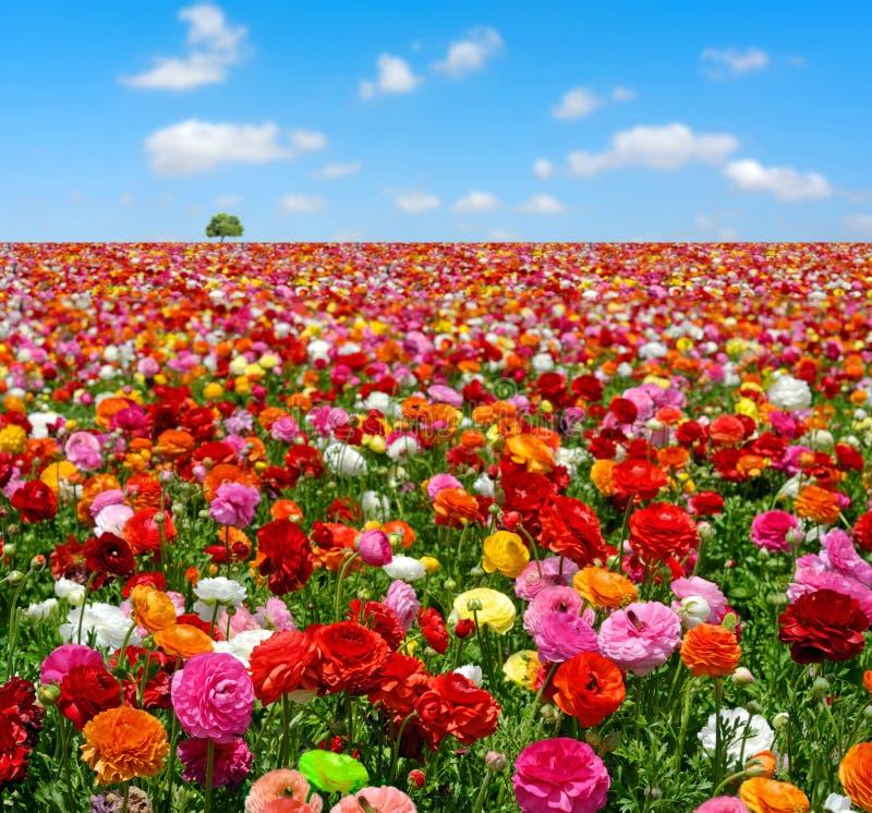 Giacimento di fiori fotografie stock libere da diritti