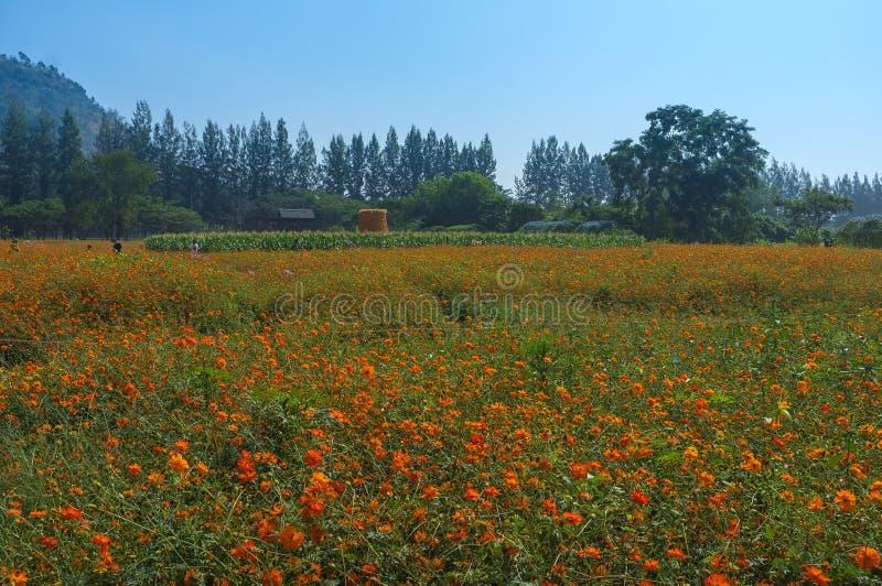 Giacimento di fiori in azienda agricola fotografie stock