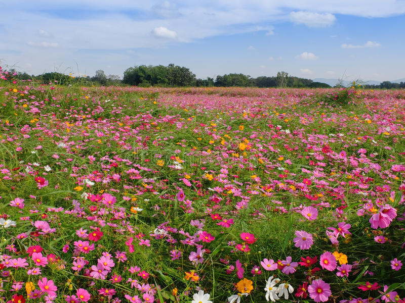 Giacimento di fiori dell'universo fotografia stock