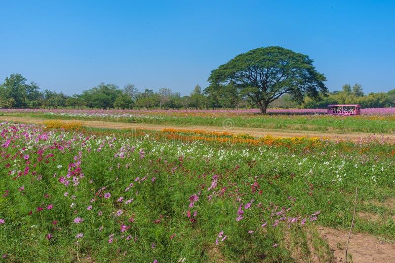 Giacimento di fiori e grande albero fotografia stock