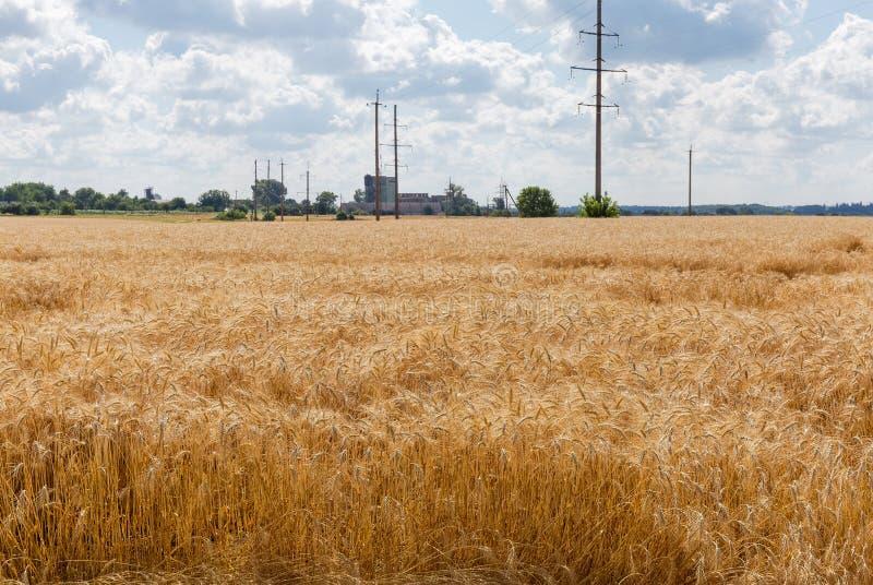 Giacimento di grano contro della linea elettrica ed i fabbricati rurali immagine stock libera da diritti