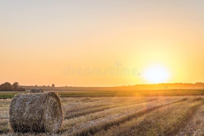 Giacimento di grano dopo il raccolto con la balla della paglia alla luce della lampadina bassa del sole di sera immagine stock