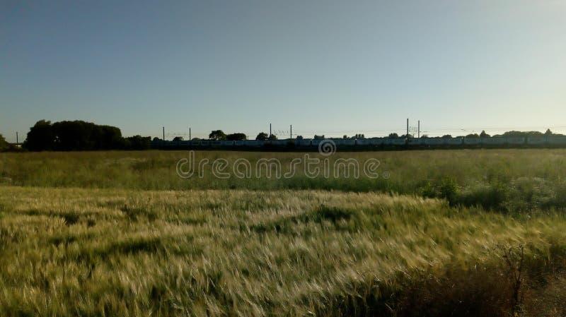 Giacimento di grano, linea del treno immagine stock
