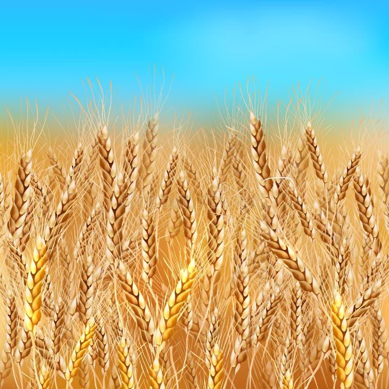 Giacimento di grano realistico di vettore illustrazione di stock