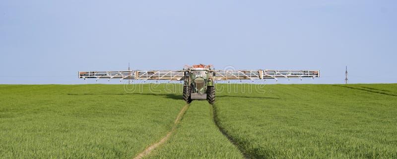 Giacimento di grano di spruzzatura fotografia stock libera da diritti