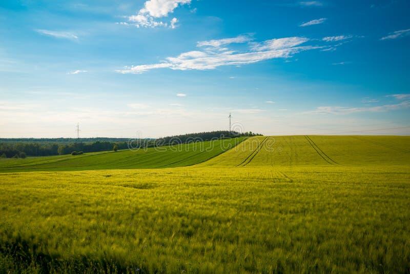 Giacimento di grano verde e giallo nella stagione primaverile sotto cielo blu, ampia foto Con lo spazio della copia fotografia stock libera da diritti
