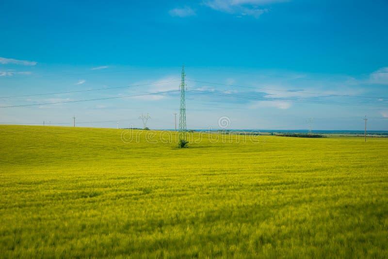Giacimento di grano verde e giallo nella stagione primaverile sotto cielo blu, ampia foto Con lo spazio della copia immagine stock libera da diritti