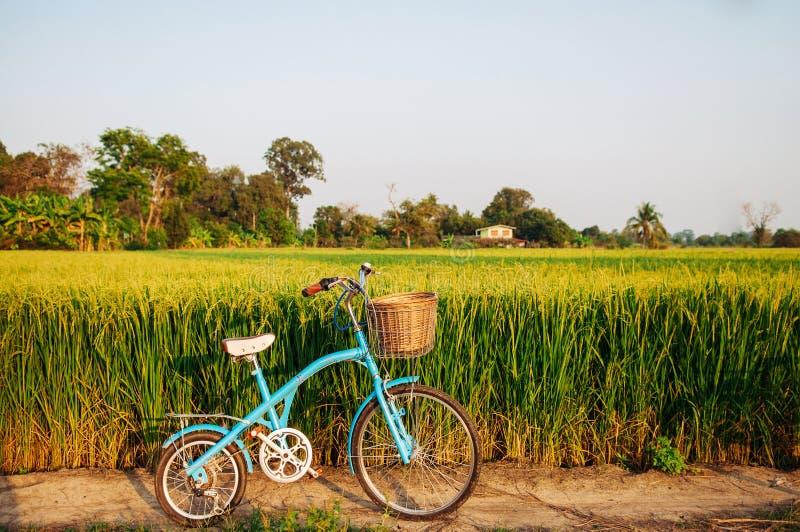 Giacimento e bicicletta verdi tropicali del riso della strada non asfaltata rurale in Koh Tep fotografia stock