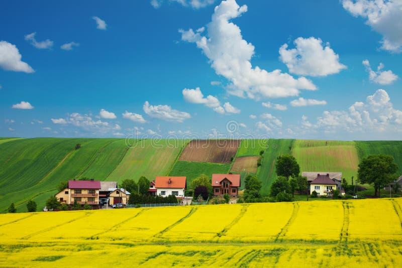 Giacimento e case del seme di ravizzone sulla collina fotografia stock libera da diritti