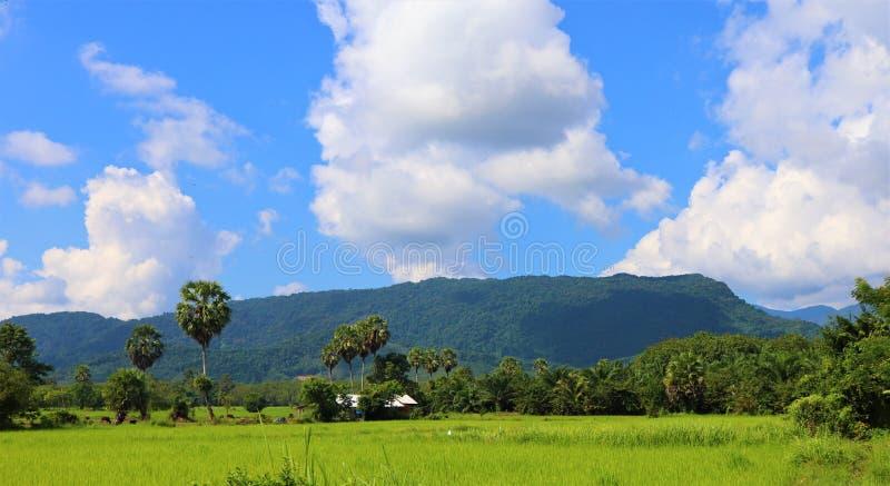 Giacimento e cielo del riso immagine stock libera da diritti