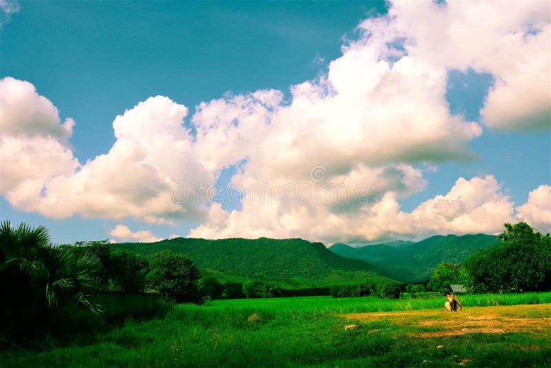 Giacimento e cielo del riso immagini stock libere da diritti