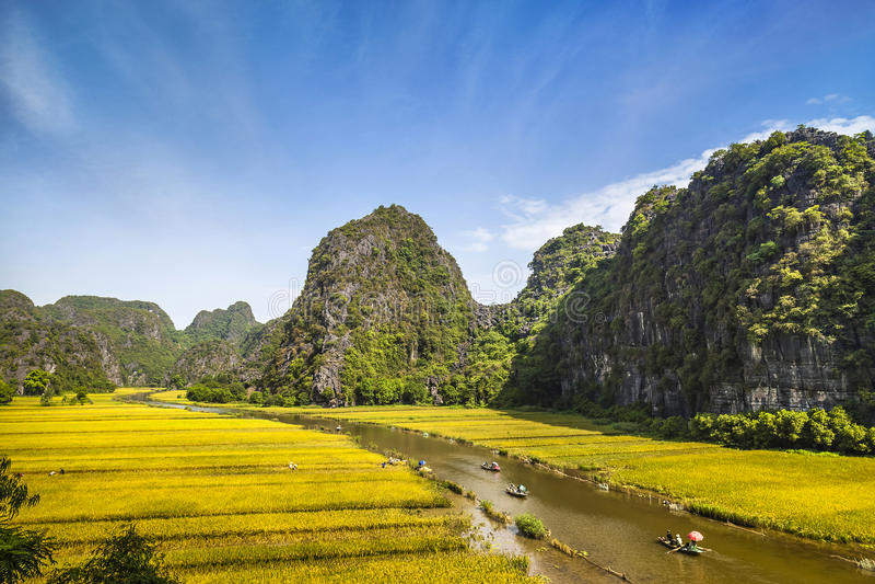 Giacimento e fiume del riso in TamCoc, NinhBinh, Vietnam immagine stock