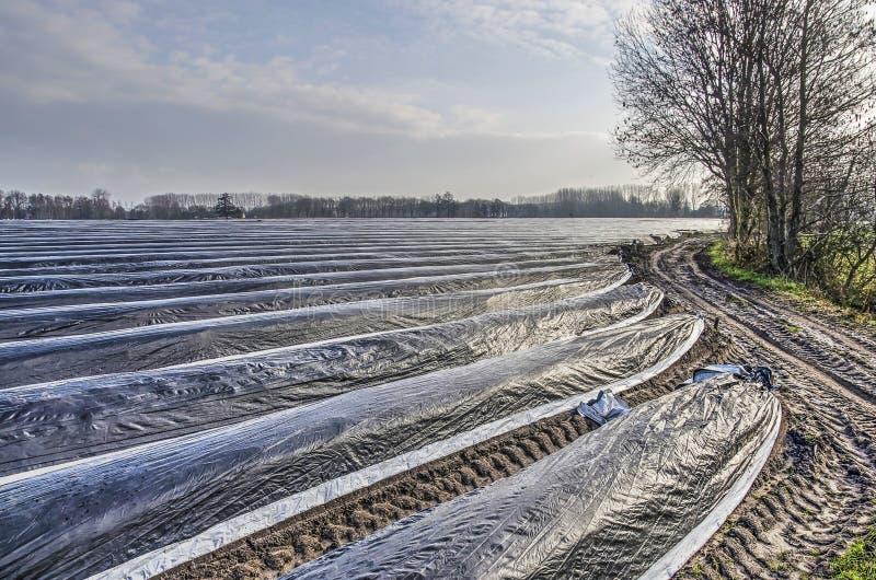 Giacimento e strada non asfaltata dell'asparago immagini stock