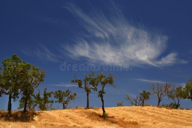 Giacimento ed alberi del fieno fotografia stock