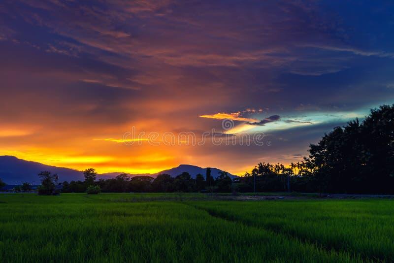 Giacimento fresco del riso del terrazzo sopra la catena montuosa ed il bello tramonto fotografia stock