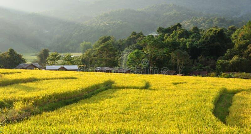 Download Giacimento A Terrazze Chiang Mai, Tailandia Del Riso Fotografia Stock - Immagine di pianta, bello: 55358154