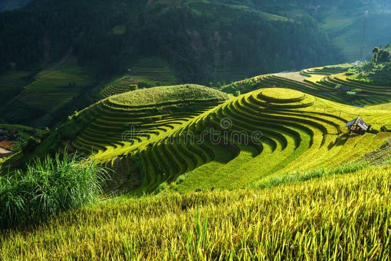 Giacimento a terrazze del riso nella stagione del raccolto in MU Cang Chai, Vietnam Destinazione popolare di viaggio di Mam Xoi fotografie stock libere da diritti