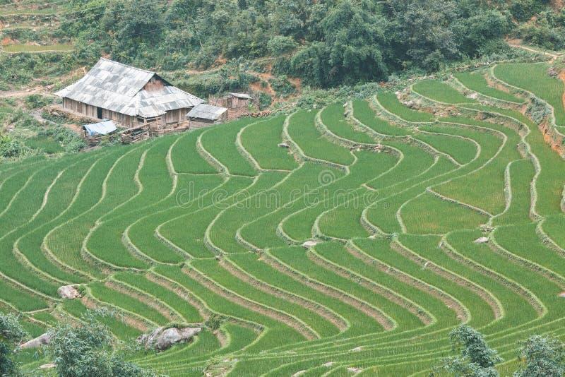 Giacimento a terrazze del riso, Vietnam fotografie stock libere da diritti