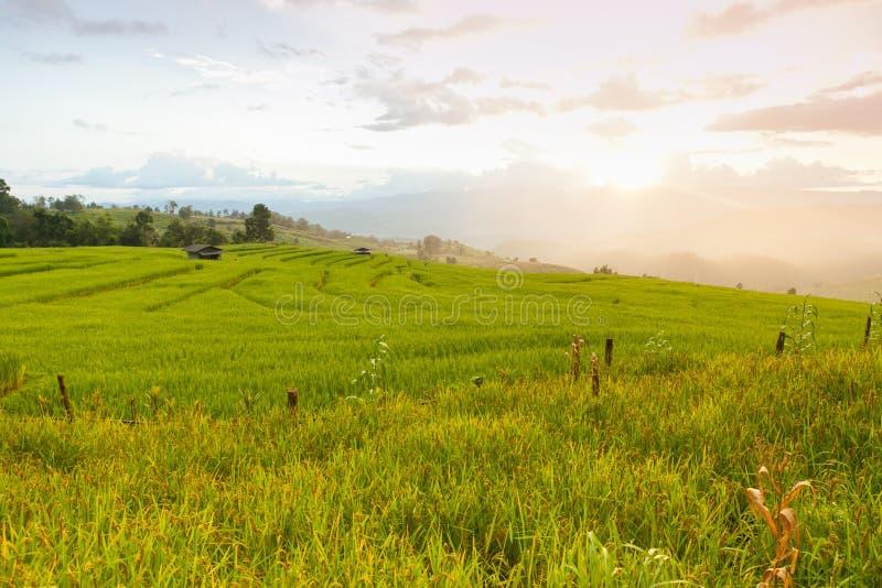 Giacimento a terrazze verde del riso in Chiangmai, Tailandia (Foc selettivo immagini stock libere da diritti